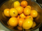 My precious but plenty of Meyer Lemons